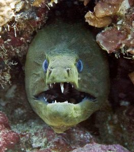 http://www.messersmith.name/wordpress/wp-content/moray_eel_img_2426.jpg