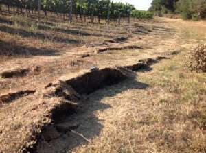 Photo of 2014 surface rupture from Mag. 6 Earthquake in Napa, CA (U.S.G.S)